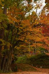 花筐公園の紅葉