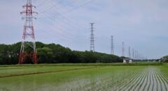 水田 そして 鉄塔