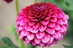 札幌 (9月だけど)8月の花事情 52