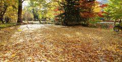 落ち葉で埋め尽くされた池