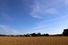 空と田んぼ 2