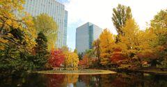 北海道庁前池の紅葉