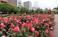 街中の花園 4