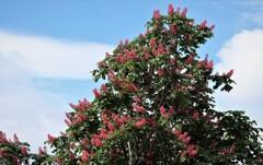 2021年5月 札幌の花たち 木の花