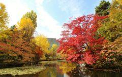 北海道庁の紅葉