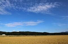 空と田んぼ 1