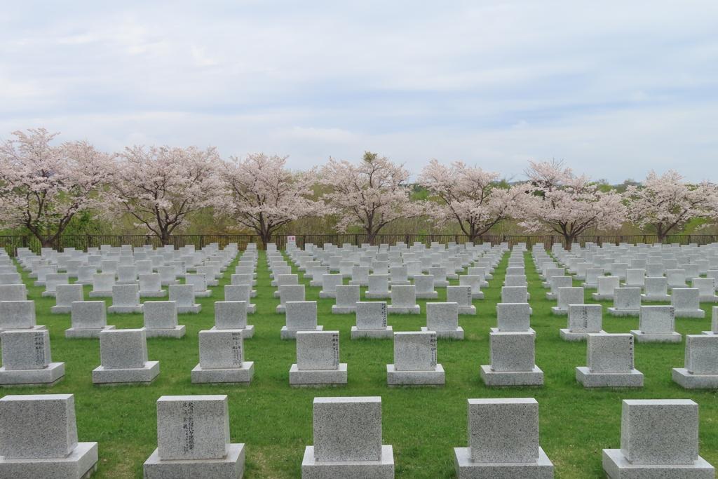 桜に向かって