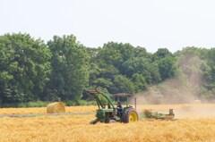 猛暑の中の農作業