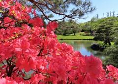 赤い花と庭園