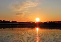 夕陽と水田と列車 その2