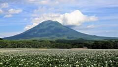山と畑 3