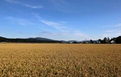 空と田んぼ 3
