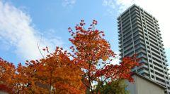 紅葉とマンション