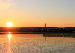 夕陽と水田と列車 その1