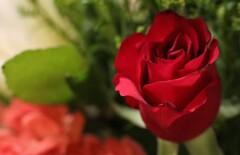 居間の花たち 5