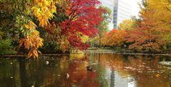 北海道庁前池の鴨と紅葉