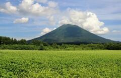山と畑 2