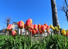街の花 ミックス色