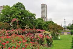 街中の花園 3
