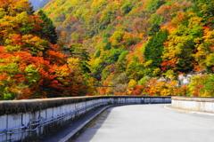 「ダム湖の紅葉」