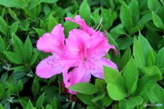 好きです。ピンク!