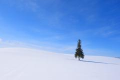 クリスマスツリーの木と。