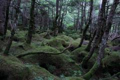 白駒池・苔の森②