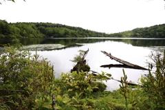 白駒池・苔の森①