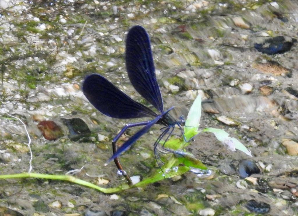200728蜻蛉