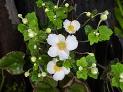 201013花