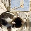 180212猫と水彩画