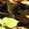 180722蜻蛉.4