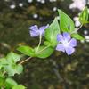 200415花5