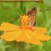 190731蝶と花2