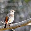 200102鳥