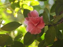 201031花
