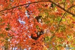 紅葉の中のお地蔵様