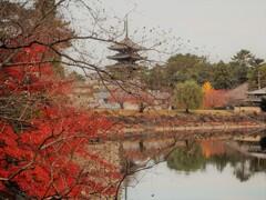 晩秋の奈良を往く[興福寺・五重塔]