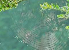 CD of the cobweb