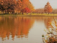 琥珀色の水辺