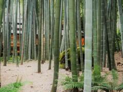 鎌倉散策~竹の庭・報国寺