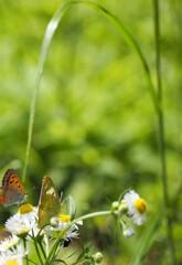 蝶たちのつぶやき