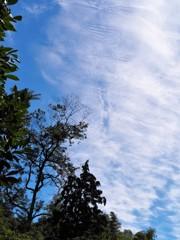 秋を探して~雲