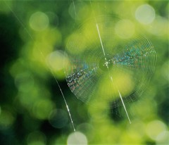夏惜しむ~蜘蛛の糸