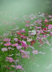 秋の心を知る花か