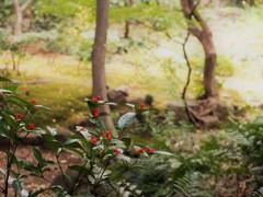 庭園美 (3)~実千両