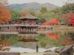 晩秋の奈良を往く[浮見堂]
