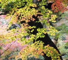 庭園美 (2)~かえで紅葉