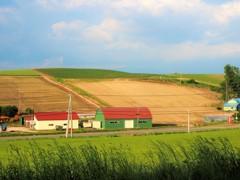 暮れ泥む美瑛の丘