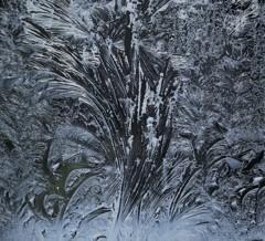 窓に咲く氷花